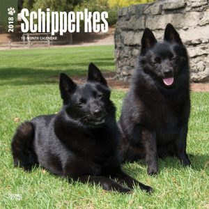 Schipperkes 2018 12 X 12 Inch Monthly Square Wall Calendar