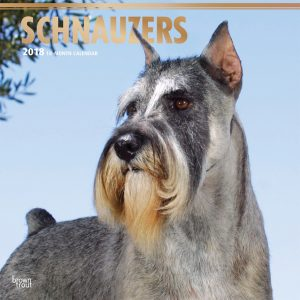 Schnauzers 2018 12 X 12 Inch Monthly Square Wall Calendar With Foil Stamped Cover