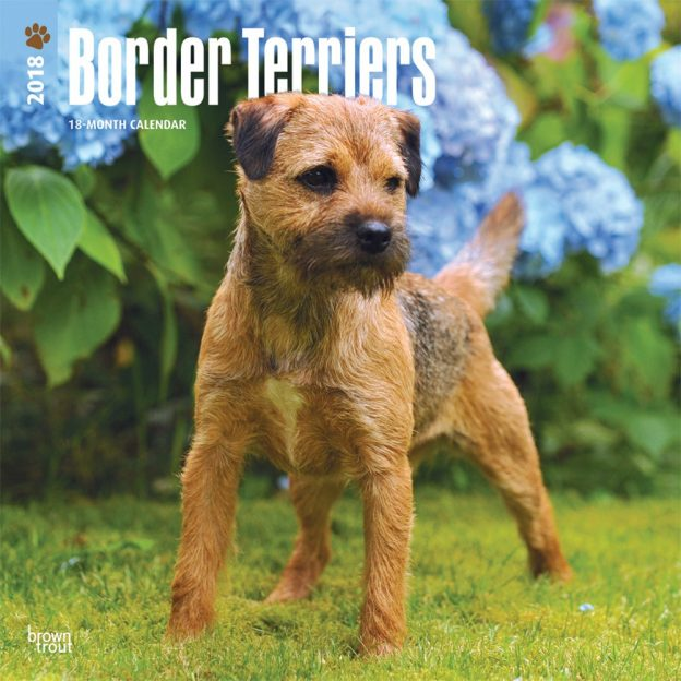 Border Terriers 2018 12 X 12 Inch Monthly Square Wall Calendar