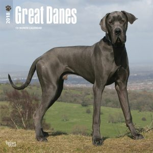 Great Danes International Edition 2018 12 X 12 Inch Monthly Square Wall Calendar