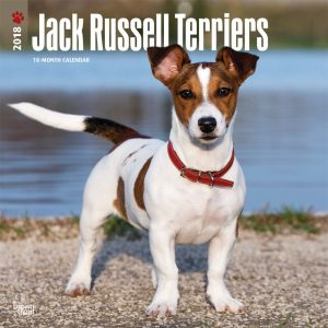 Jack Russell Terriers International Edition 2018 12 X 12 Inch Monthly Square Wall Calendar