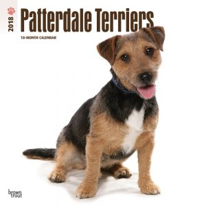 Patterdale Terriers 2018 12 X 12 Inch Monthly Square Wall Calendar