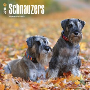 Schnauzers International Edition 2018 12 X 12 Inch Monthly Square Wall Calendar