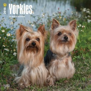 Yorkshire Terriers International Edition 2018 12 X 12 Inch Monthly Square Wall Calendar