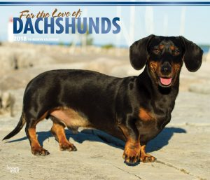For The Love Of Dachshunds 2018 14 X 12 Inch Monthly Deluxe Wall Calendar With Foil Stamped Cover