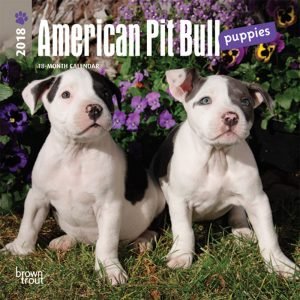 American Pit Bull Terrier Puppies 2018 7 X 7 Inch Monthly Mini Wall Calendar