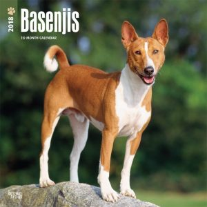 Basenjis 2018 12 X 12 Inch Monthly Square Wall Calendar