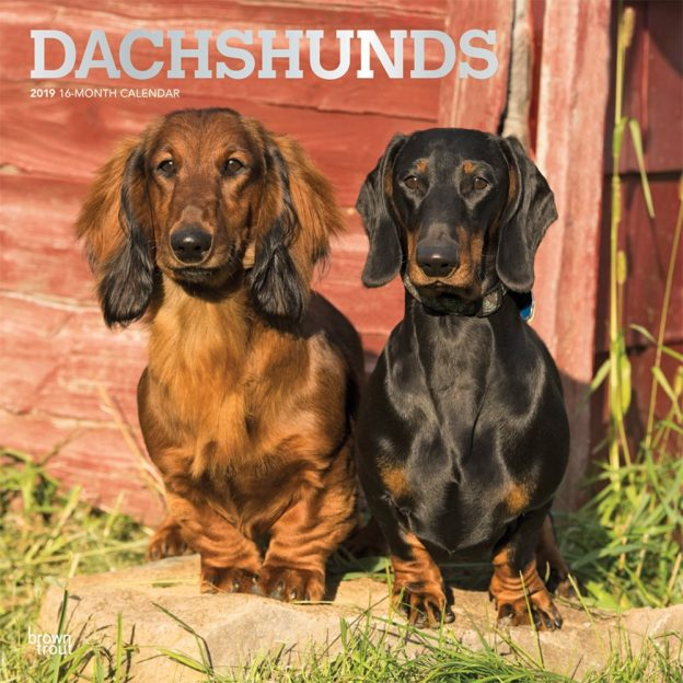 Dachshunds 2019 12 x 12 Inch Monthly Square Wall Calendar with Foil Stamped Cover, Animals Dog Breeds