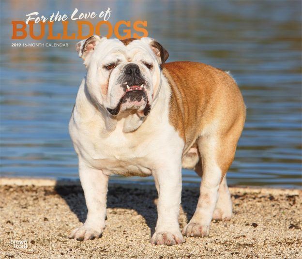 For the Love of Bulldogs 2019 14 x 12 Inch Monthly Deluxe Wall Calendar with Foil Stamped Cover, Animal Dog Breeds