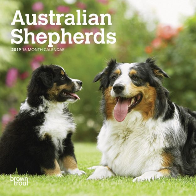 Australian Shepherds 2019 7 x 7 Inch Monthly Mini Wall Calendar, Animals Dog Breeds