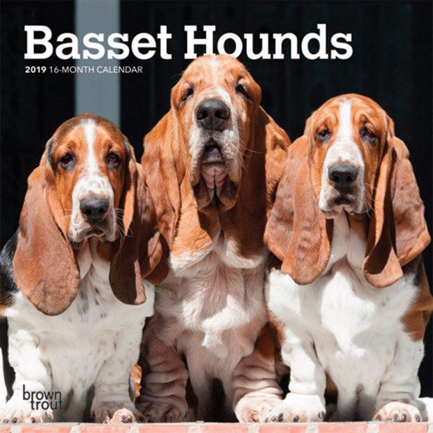 Basset Hounds 2019 7 x 7 Inch Monthly Mini Wall Calendar, Animals Dog Breeds Hound