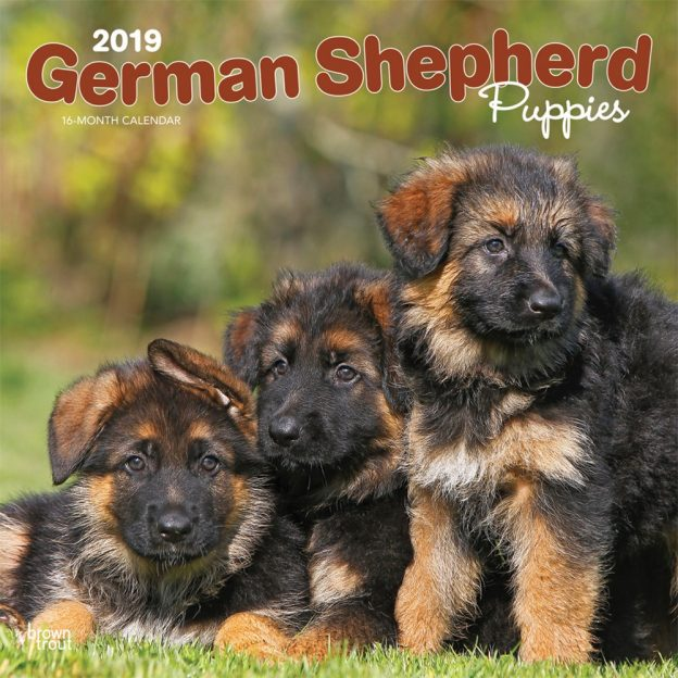 German Shepherd Puppies 2019 12 x 12 Inch Monthly Square Wall Calendar, Animals Dog Breeds Puppies