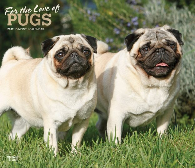 For the Love of Pugs 2019 14 x 12 Inch Monthly Deluxe Wall Calendar with Foil Stamped Cover, Animals Dog Breeds