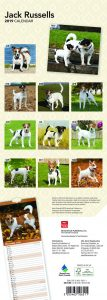 Jack Russells 2019 6.75 x 16.5 Inch Monthly Slimline Wall Calendar, Dog Canine