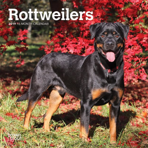 Rottweilers 2019 7 x 7 Inch Monthly Mini Wall Calendar