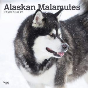 Alaskan Malamutes 2019 12 x 12 Inch Monthly Square Wall Calendar
