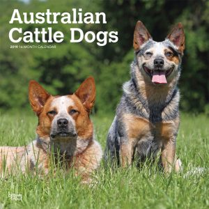 Australian Cattle Dogs 2019 12 x 12 Inch Monthly Square Wall Calendar