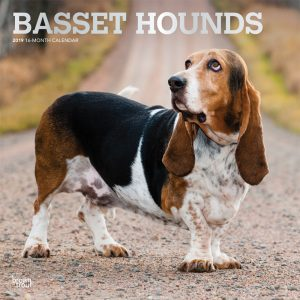 Basset Hounds 2019 12 x 12 Inch Monthly Square Wall Calendar with Foil Stamped Cover