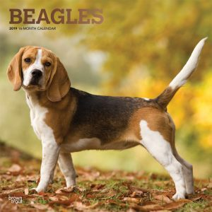 Beagles 2019 12 x 12 Inch Monthly Square Wall Calendar with Foil Stamped Cover