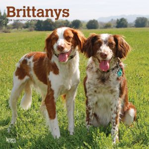 Brittanys 2019 12 x 12 Inch Monthly Square Wall Calendar