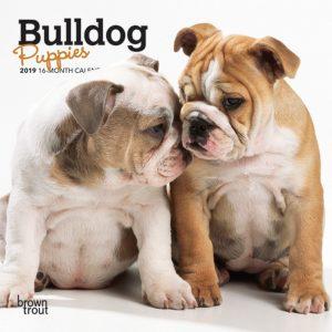Bulldog Puppies 2019 7 x 7 Inch Monthly Mini Wall Calendar