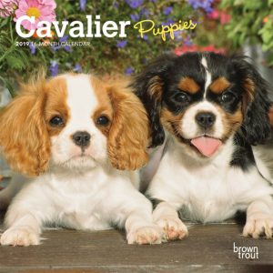 Cavalier King Charles Spaniel Puppies 2019 7 x 7 Inch Monthly Mini Wall Calendar