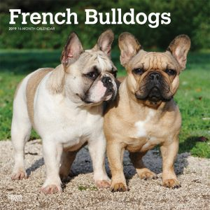 French Bulldogs 2019 12 x 12 Inch Monthly Square Wall Calendar