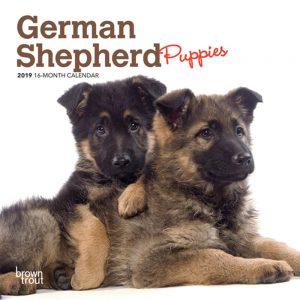 German Shepherd Puppies 2019 7 x 7 Inch Monthly Mini Wall Calendar