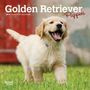 Golden Retriever Puppies 2019 7 x 7 Inch Monthly Mini Wall Calendar