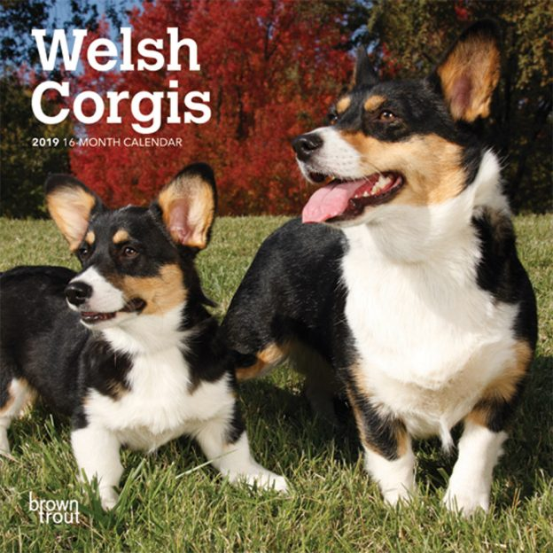 Welsh Corgis 2019 7 x 7 Inch Monthly Mini Wall Calendar