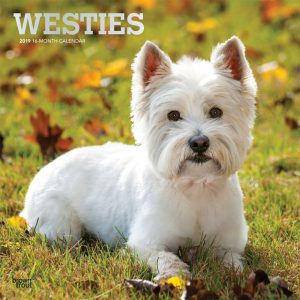 West Highland White Terriers 2019 12 x 12 Inch Monthly Square Wall Calendar with Foil Stamped Cover