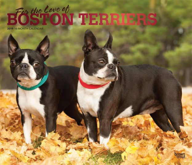 For the Love of Boston Terriers 2019 14 x 12 Inch Monthly Deluxe Wall Calendar with Foil Stamped Cover