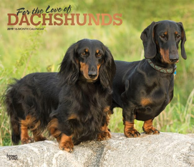 For the Love of Dachshunds 2019 14 x 12 Inch Monthly Deluxe Wall Calendar with Foil Stamped Cover