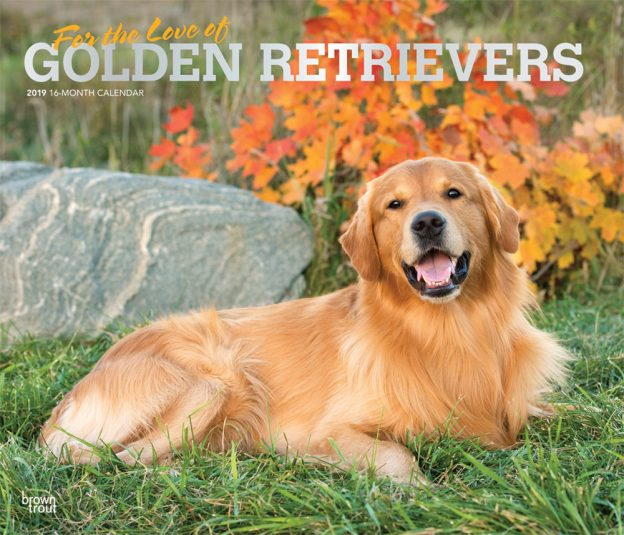 For the Love of Golden Retrievers 2019 14 x 12 Inch Monthly Deluxe Wall Calendar with Foil Stamped Cover