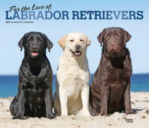 For the Love of Labrador Retrievers 2019 14 x 12 Inch Monthly Deluxe Wall Calendar with Foil Stamped Cover