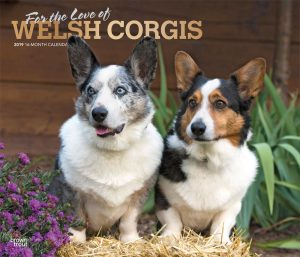 For the Love of Welsh Corgis 2019 14 x 12 Inch Monthly Deluxe Wall Calendar with Foil Stamped Cover