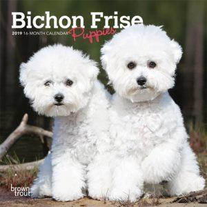 Bichon Frise Puppies 2019 7 x 7 Inch Monthly Mini Wall Calendar