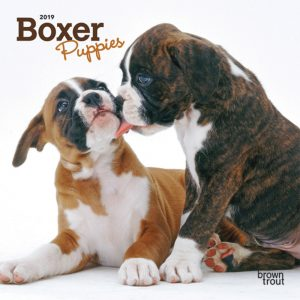 Boxer Puppies 2019 7 x 7 Inch Monthly Mini Wall Calendar
