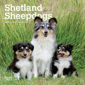 Shetland Sheepdogs 2019 7 x 7 Inch Monthly Mini Wall Calendar