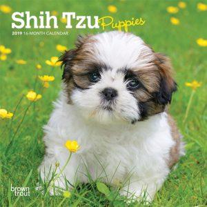 Shih Tzu Puppies 2019 7 x 7 Inch Monthly Mini Wall Calendar