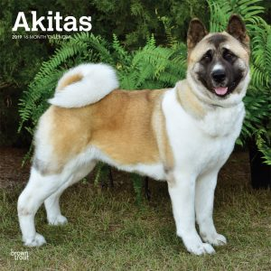 Akitas 2019 12 x 12 Inch Monthly Square Wall Calendar