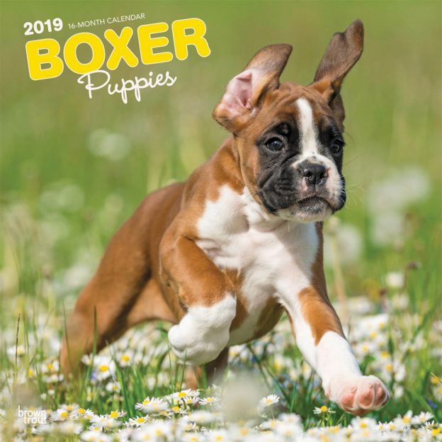 Boxer Puppies 2019 12 x 12 Inch Monthly Square Wall Calendar