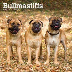 Bullmastiffs 2019 12 x 12 Inch Monthly Square Wall Calendar