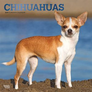 Chihuahuas 2019 12 x 12 Inch Monthly Square Wall Calendar with Foil Stamped Cover