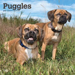 Puggles 2019 12 x 12 Inch Monthly Square Wall Calendar