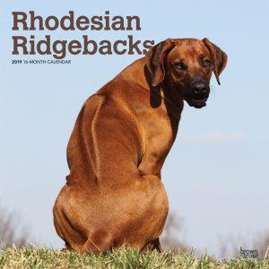 Rhodesian Ridgebacks 2019 12 x 12 Inch Monthly Square Wall Calendar