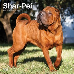 Shar Pei 2019 12 x 12 Inch Monthly Square Wall Calendar