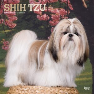 Shih Tzu 2019 12 x 12 Inch Monthly Square Wall Calendar with Foil Stamped Cover