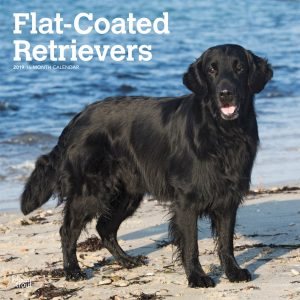 Flat Coated Retrievers 2019 12 x 12 Inch Monthly Square Wall Calendar