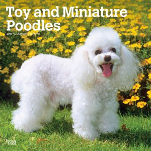 Toy and Miniature Poodles 2019 12 x 12 Inch Monthly Square Wall Calendar